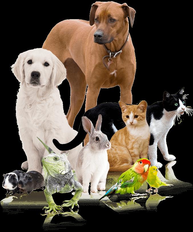 A Joyful Companion - About - Bloomington, IN Pet Sitter